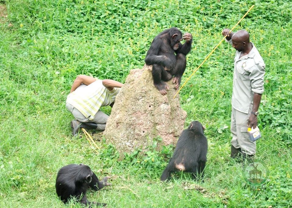 Chimpanzee Enrichment